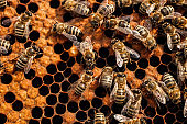 bees on empty honeycombs
