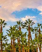 Palm Trees, Landscape, Israel
