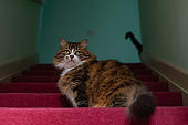 Tabby cat sitting on the stairs