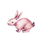 cute rabbit drawing in watercolor