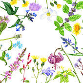 wild plants and flowers, drawing by color pencils