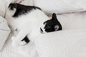 Adorable cat sleeping on bed with stylish sheets in morning light. Cute kitty relaxing on cozy owners pillows in modern room. Domestic pets