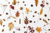 Autumn flat lay. Fall leaves, berries, acorns, walnuts, cinnamon and anise on white background. Minimalistic autumn natural pattern