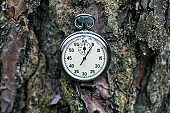 Stopwatch on old pine tree bark.