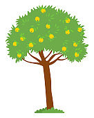Apple Tree with Yellow Fruits on Top Harvesting