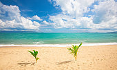 beautiful sandy beach and tropical sea with two little palm tree