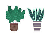 Haworthia Plant and Leafy Houseplant in Pot Set
