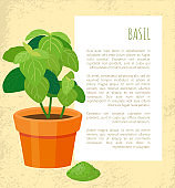 Basil Poster and Plant in Pot Vector Illustration