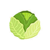 Cabbage Healthy Vegetable, Vector Illustration