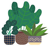 Rubber Plant and Houseplant, Greenhouse Flora