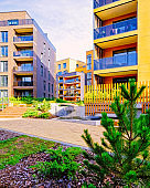 Pine tree at Modern architectural complex of apartment residential buildings reflex