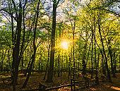 Spring forest landscape at sunset or sunrise