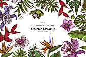 Floral design with colored monstera, banana palm leaves, strelitzia, heliconia, tropical palm leaves, orchid