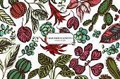 Floral design with colored ficus, iresine, kalanchoe, calathea, guzmania, cactus