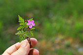 hand holding a small flower