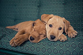 Puppies having a rest