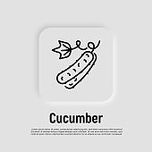Cucumber thin line icon. Healthy vegan food. Ingredient for salad. Vector illustration.