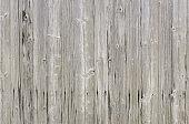 Natural bright grey barn wood wall. Wall texture background pattern.