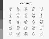 Fruits, vegetables, berries and nuts thin line icons set: pineapple, apple, avocado, cabbage, carrot, cherry, coconut, grapes, tomato, broccoli. Vector illustration.
