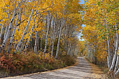 Landscape photograph with road and autumn aspens