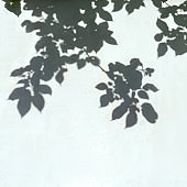 Abstract leaves shadow on white background.