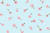 Flower blossom pattern on blue background.
