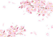 Spring flowers: cherry blossom and falling petals frame watercolor illustration trace vector