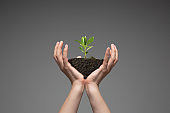 Human hands holding a fresh green plant, symbol of growing business, environmental conservation and bank savings. Planet in your hands.