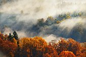 Breathtaking panoramic aerial view of the colorful red, orange and yellow trees of a mixed coniferous forest and river in a morning fog. Fairy autumn landscape. Gauja national park, Sigulda, Latvia