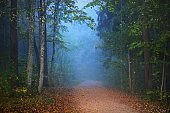 Pathway through the forest in a mysterious morning fog, natural tunnel of the colorful trees, blue light. Idyllic autumn scene. Pure nature, ecology, seasons. Atmospheric landscape. Sigulda, Latvia
