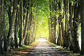 An empty dirt road through the park on a clear summer day. Mossy green trees close-up