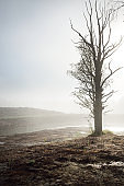 Lonely tree without leaves on the shore of drying river in a thick white fog. Soil texture close-up. Ecology, ecological issues, environmental damage and conservation, global warming, climate change