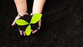 child hand planting young tree seedling on black soil