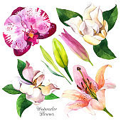 Exotic flowers watercolor illustrations set. Orchid, lilly, magnolia, floral sketch. Tropical blossom, leaves realistic watercolor cliparts. Calla lily with aquarelle texture. Postcard design