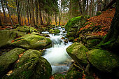 wonder forest  with creek on rocks with moss during fall
