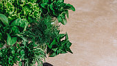 Green fresh garden herbs for culinary closeup on wooden table, top view. Arugula, parsley, dill, spinach, lettuce home planted overhead
