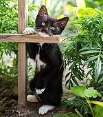 Cute fluffy black and white kitten walks in the flower garden