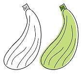 Squash vector hand drawing. Isolated vegetable on white background. Farm market product.