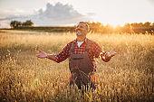 Grateful senior farmer in the wheat field