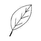 leaf icon, sticker, decor, scrapbook. sketch hand drawn doodle. vector scandinavian monochrome minimalism. summer spring decor.