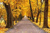 Autumn landscape, beautiful city park with fallen yellow leaves.