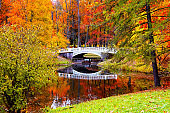 Autumn landscape, beautiful city park with white bridge and fallen yellow leaves.
