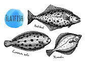 Ink sketch of flatfish