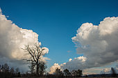 Landscape with deciduous trees and large clouds at sunset.