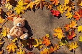 Teddy bear baby toy sitting in fallen colorful leaves outdoor. Autumn park.