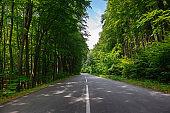 Forest Road Landscape Background