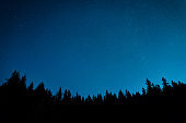 Forest under night sky with stars