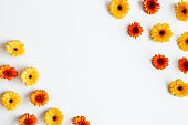 Autumn composition. Gerbera flowers on white background. Autumn, fall concept. Flat lay, top view, copy space