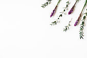 Flowers composition. Purple flowers, eucalyptus branches on white background. Flat lay, top view