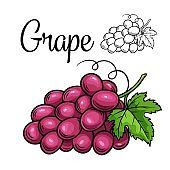 Grape vector drawing icon